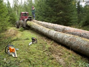 Advanced technology For tree removal